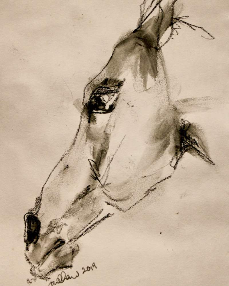 Horse Head Preliminary Drawing