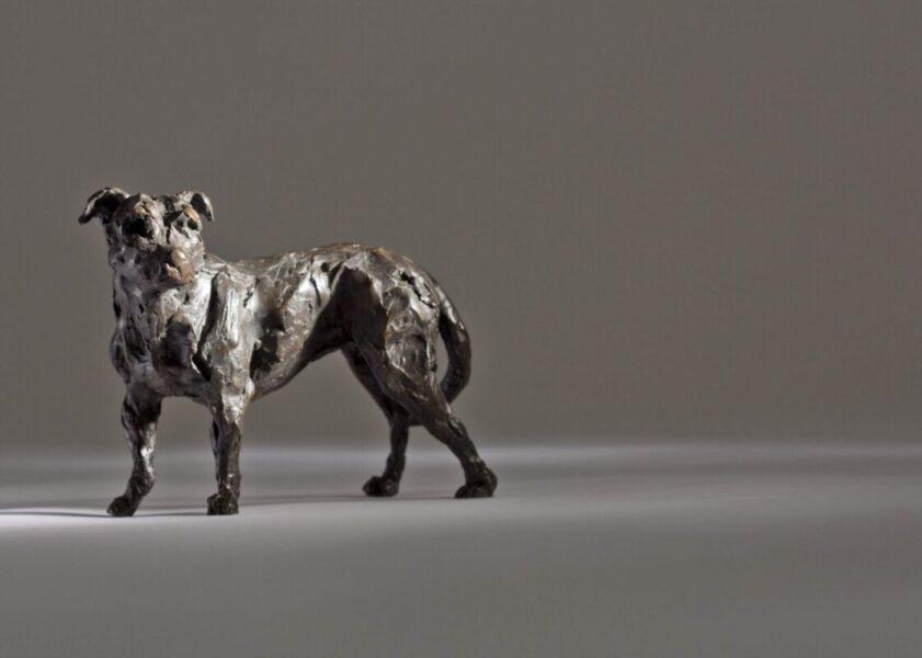 LOVING MY MASTER –  Standing Staffordshire Bull Terrier