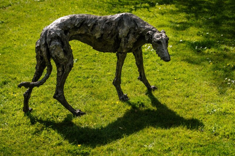 Sculpture - Bronze - Domestic dog - Garden Lurcher 15