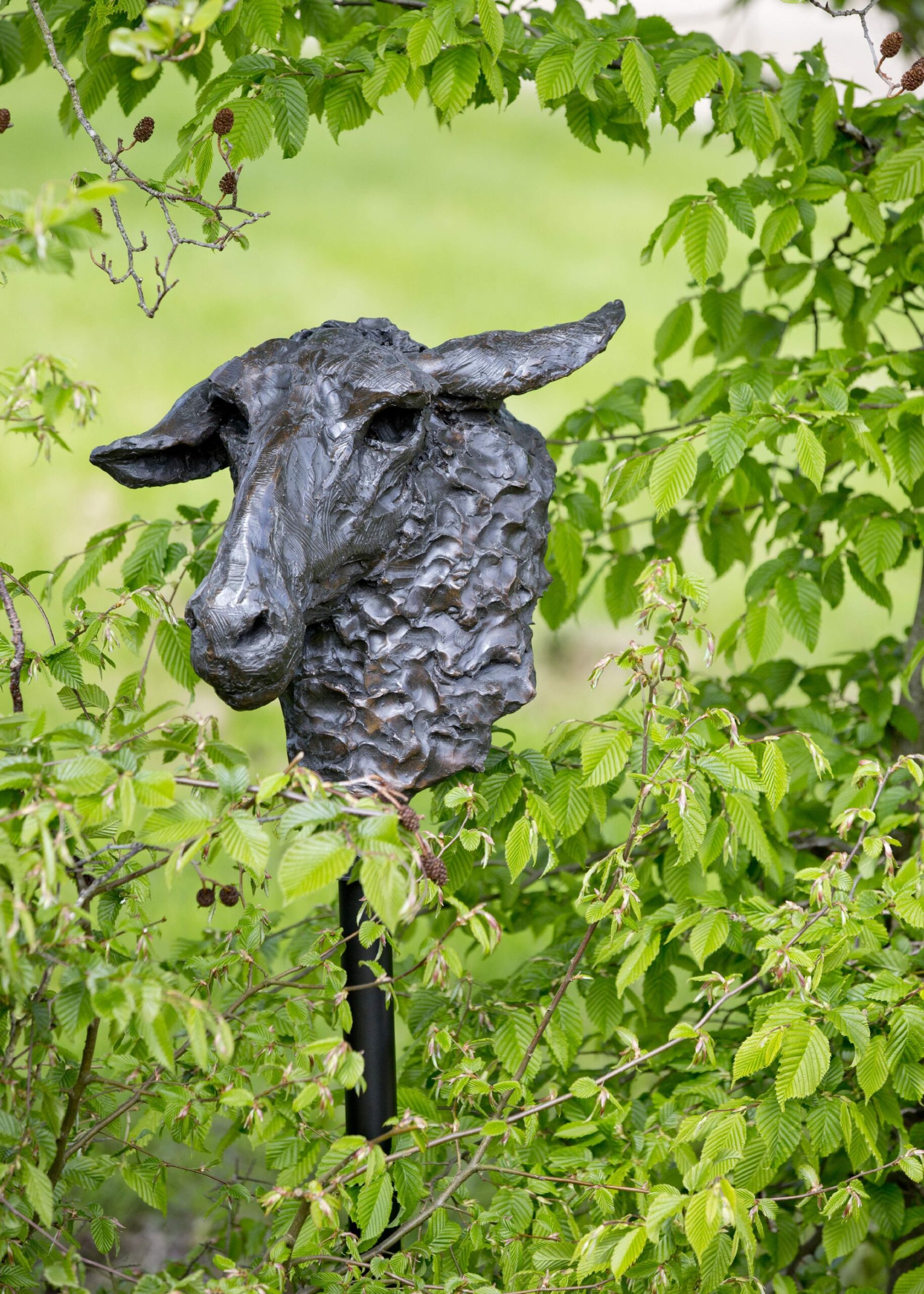 Sculpture - Bronze - Outdoor - Garden Sheep Head 1b