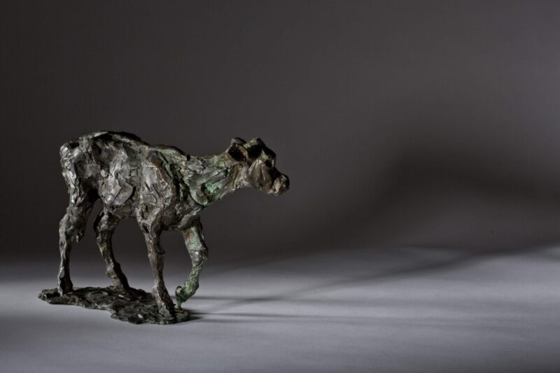 Sculpture - Bronze - Wildlife - Standing Calf 5
